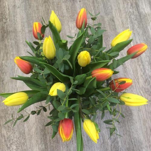 Tulipány 2 barev